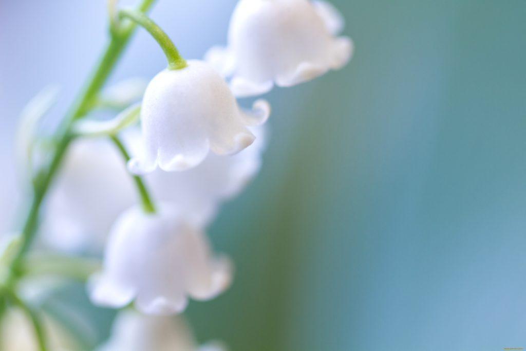 Ландыш цветок капли онлайн