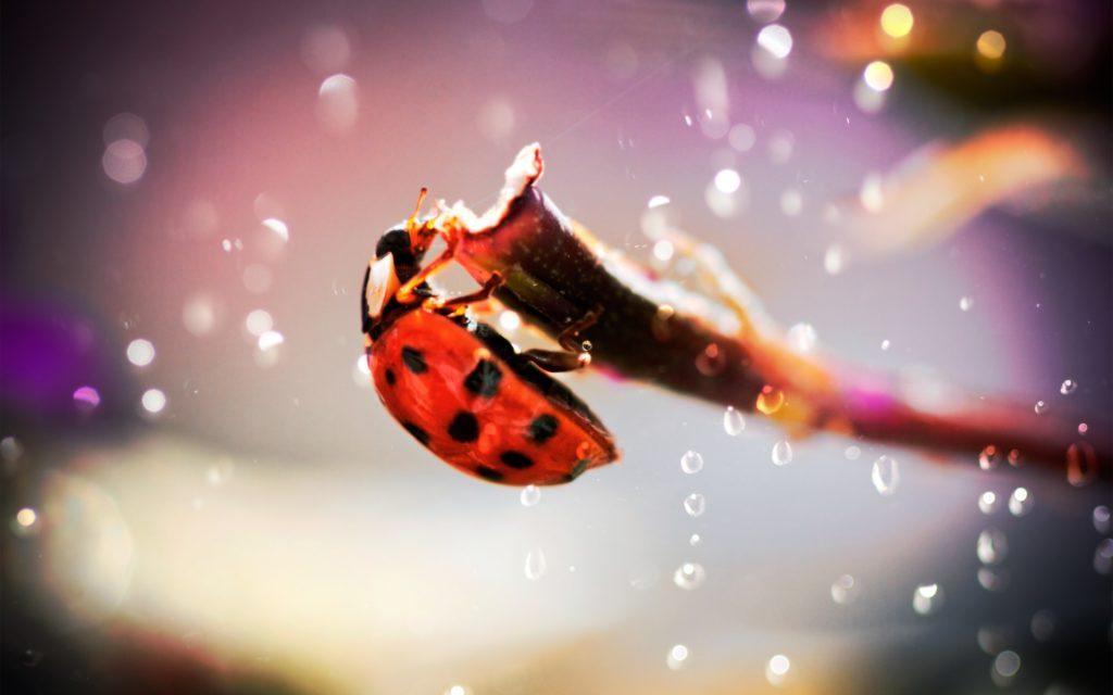 макро насекомое капли роса божья коровка подборки