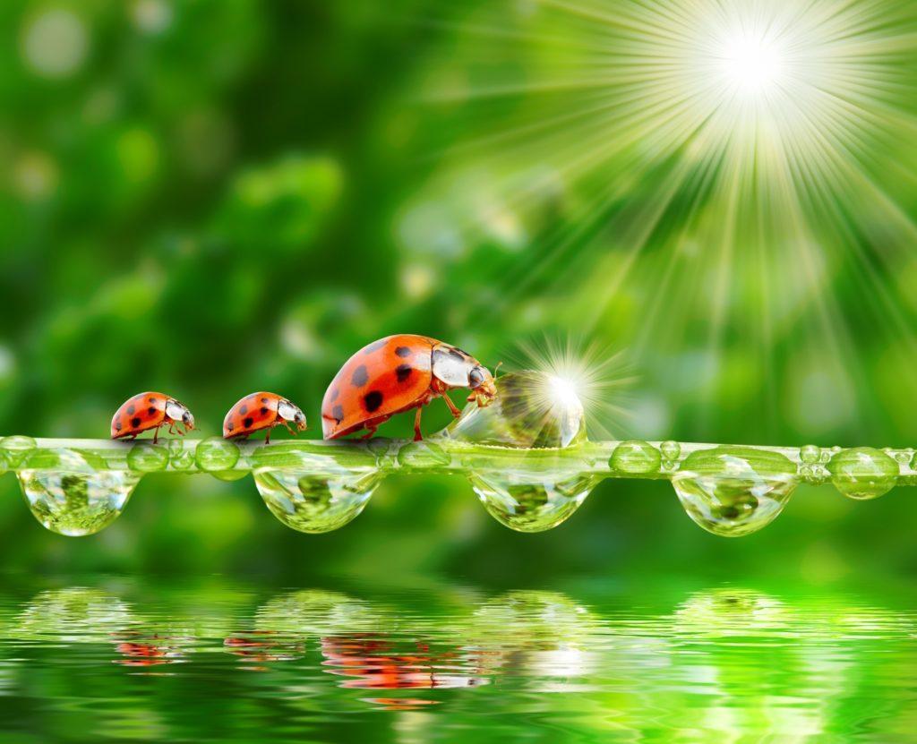 макро насекомое капли роса божья коровка загрузить